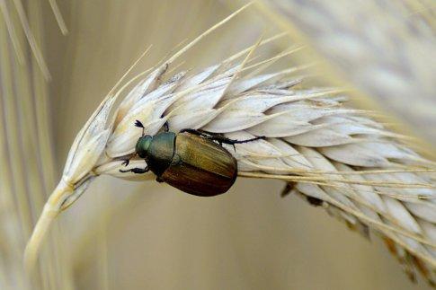 st service impresa di disinfestazione da insetti