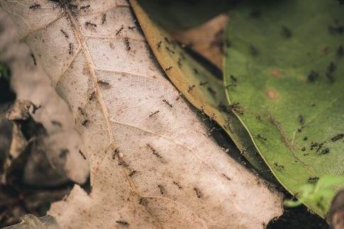 st service impresa disinfestazioni insetti